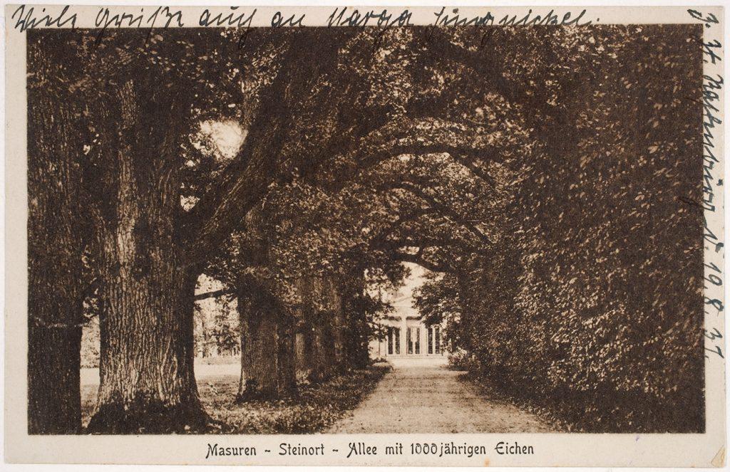 Eichenallee im Schlosspark Steinort, Masuren, Bildarchiv Herder-Institut